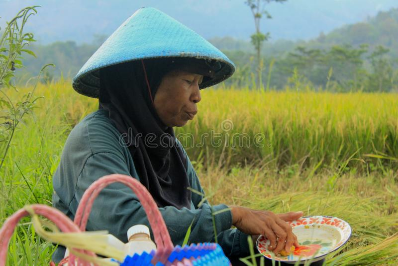 女性农夫印度尼西亚 免版税库存图片