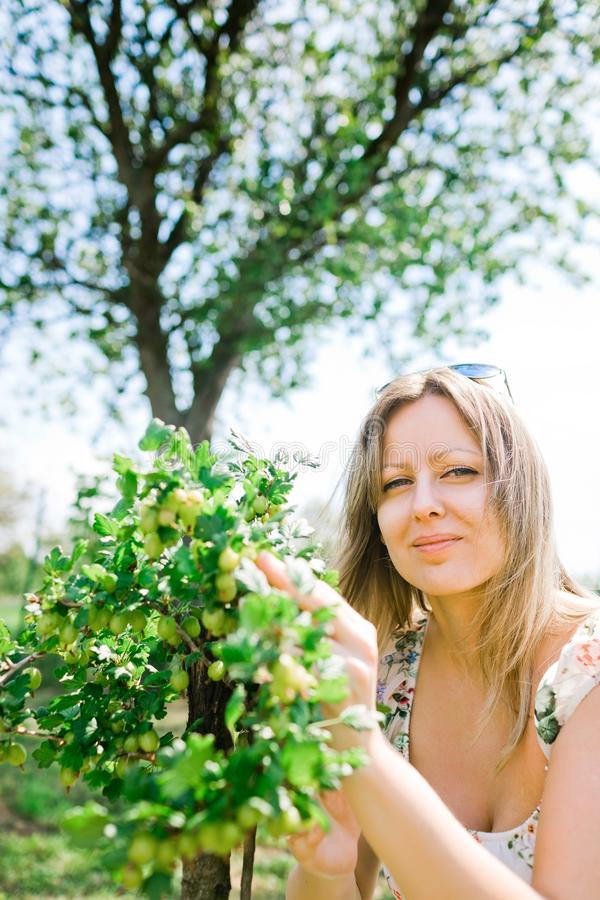 女性农夫检查成熟鹅莓 图库摄影
