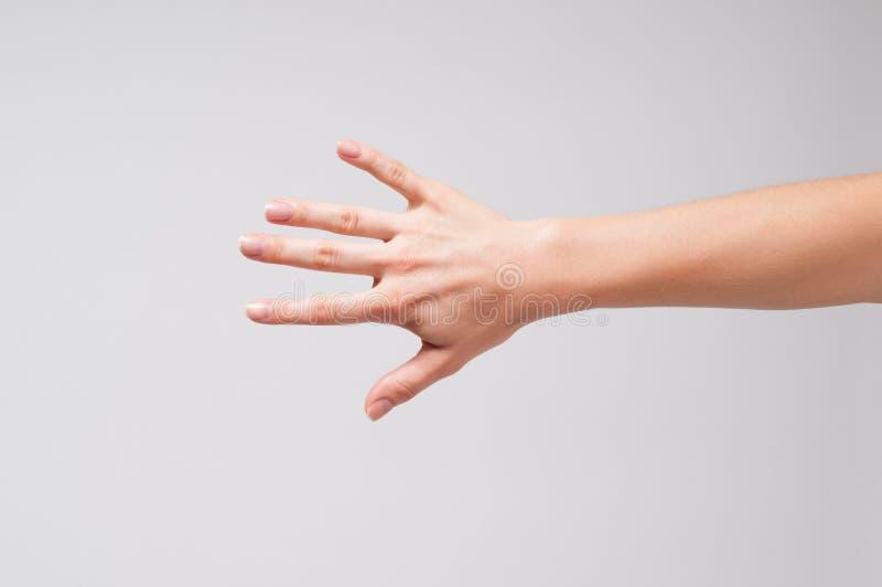 女性手和五个手指 图库摄影