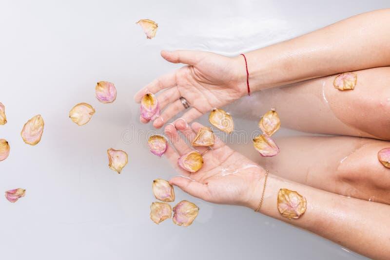 女性手在与桃红色玫瑰花瓣的水中 库存图片