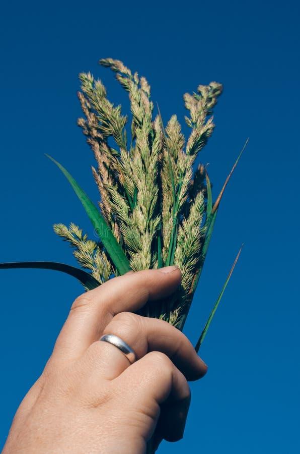 女性手培养狂放的草本花束对天空 r 与蓝色春天天空的由下往上的透视 免版税图库摄影