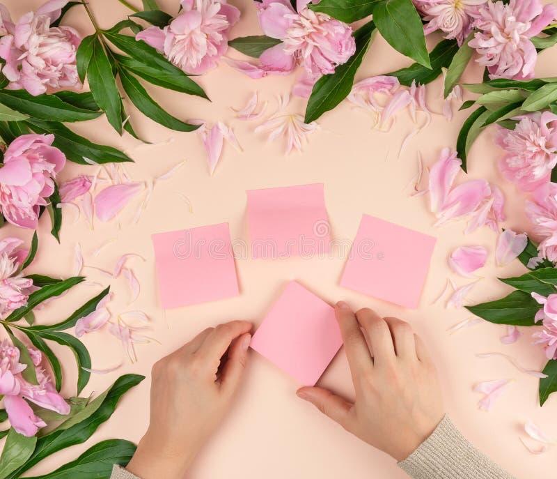 女性手胶合在背景的空的纸桃红色贴纸与开花的牡丹 免版税库存图片