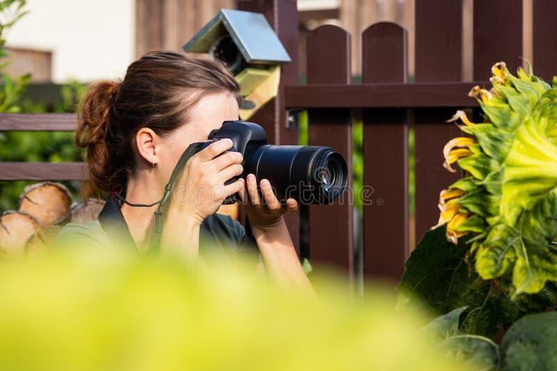 女性摄影师采取向日葵的宏观射击 免版税图库摄影