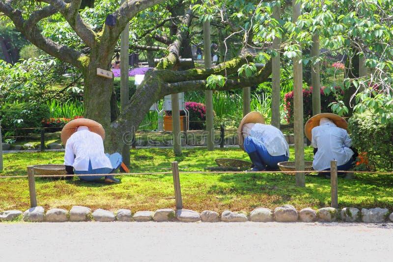 女性日本工作者从事园艺的Kenrokuan从事园艺,今池,日本 免版税库存图片