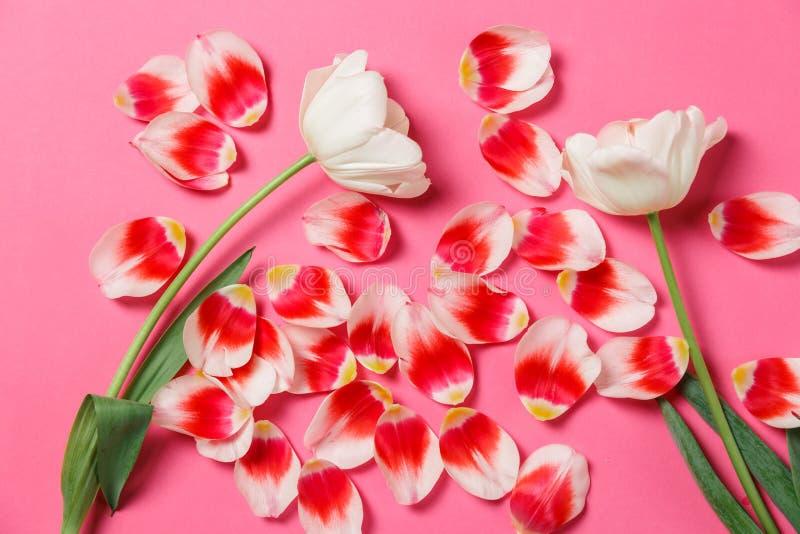 女性时髦的嘲笑与郁金香花,瓣 您的设计的拷贝空间,婚礼的,邀请,博克,卡片 免版税图库摄影