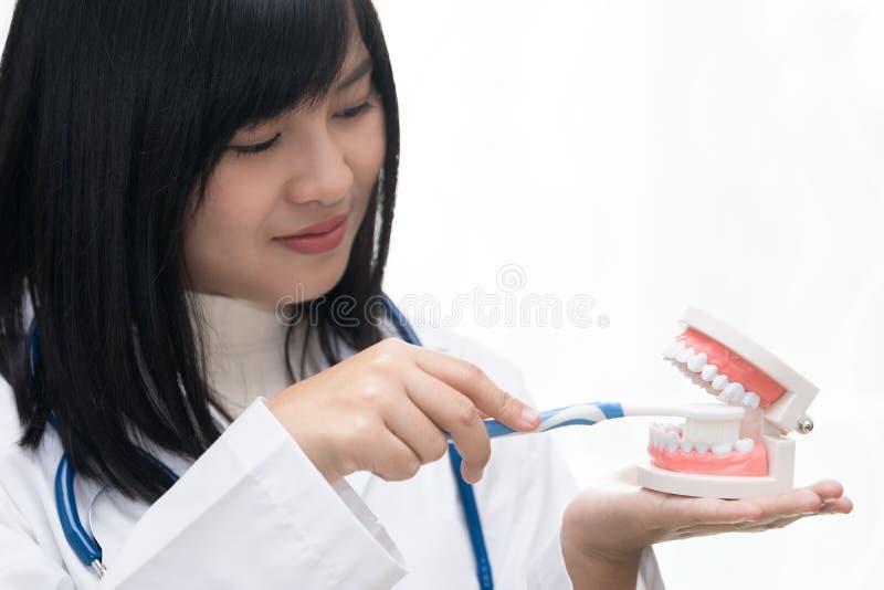 女性牙医展示有牙模型的掠过的牙 免版税库存图片