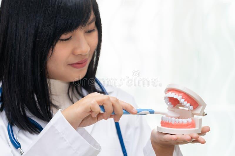 女性牙医展示有牙模型的掠过的牙 免版税库存照片