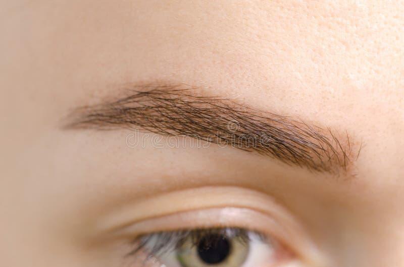 女性眼眉棕色眼睛形状 库存图片