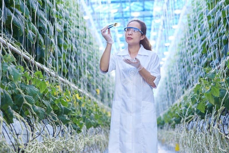 女性科学家在玻璃温室 库存图片