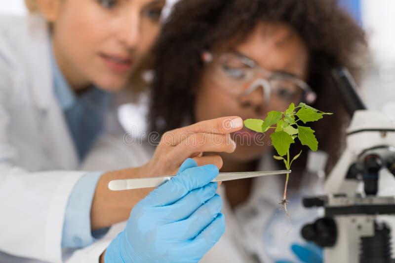 女性科学家审查运作在遗传学实验室研究研究的植物,两名妇女分析科学实验 免版税库存照片