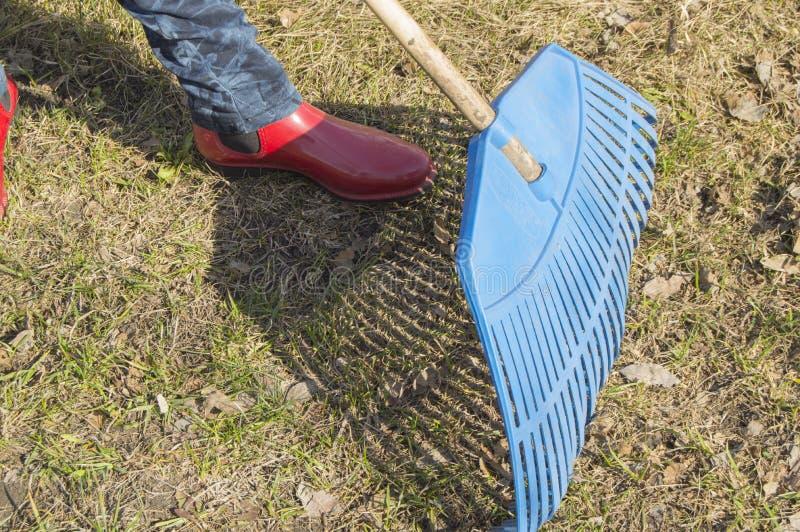 女性脚特写镜头在蓝色牛仔裤和红色胶靴的有犁耙的,庭院工作 库存图片