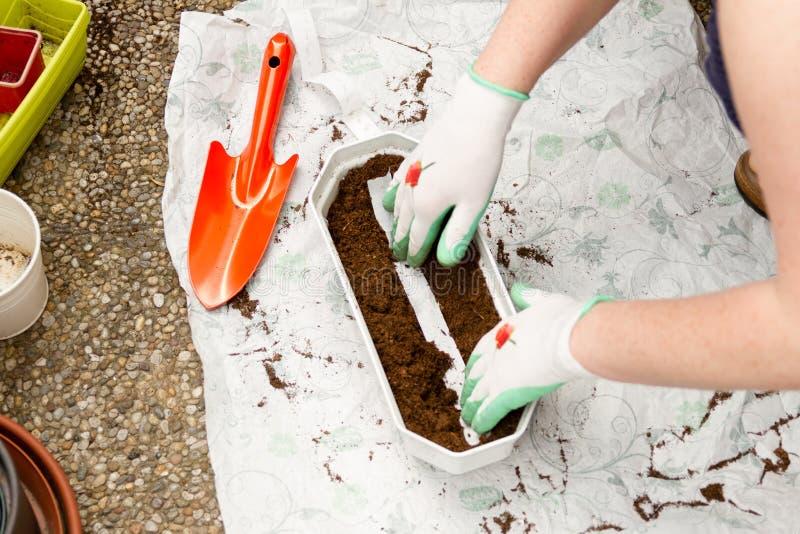 女性花匠种植plantswith种子磁带 免版税库存图片