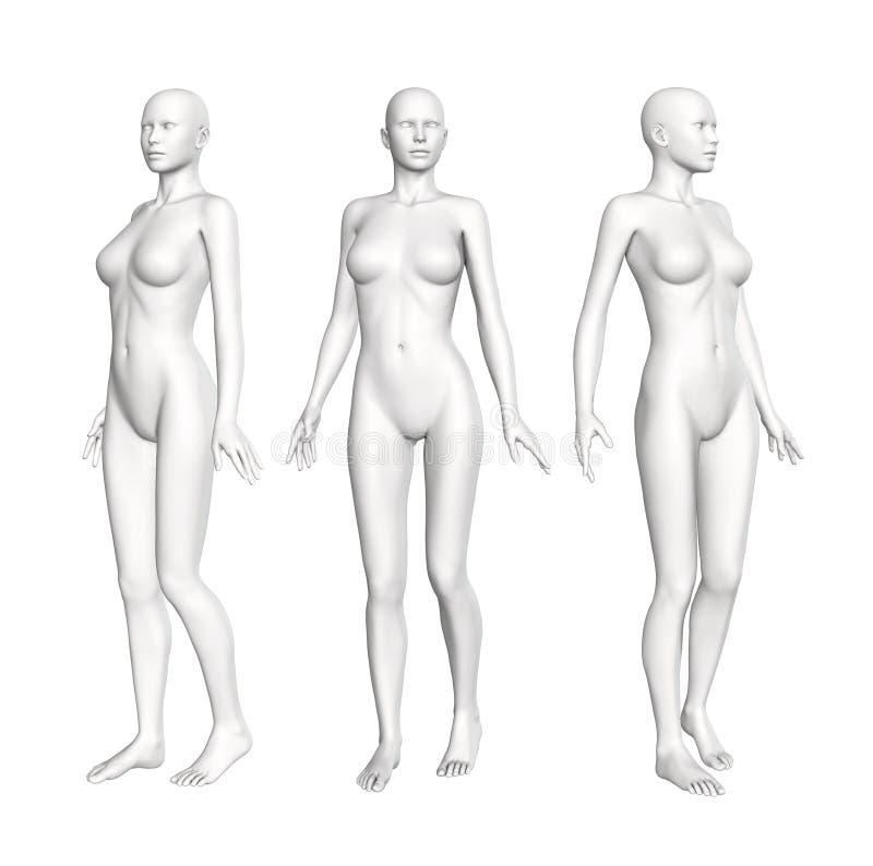 女性解剖学形象 皇族释放例证