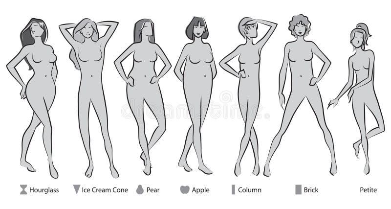 女性身体形状 向量例证