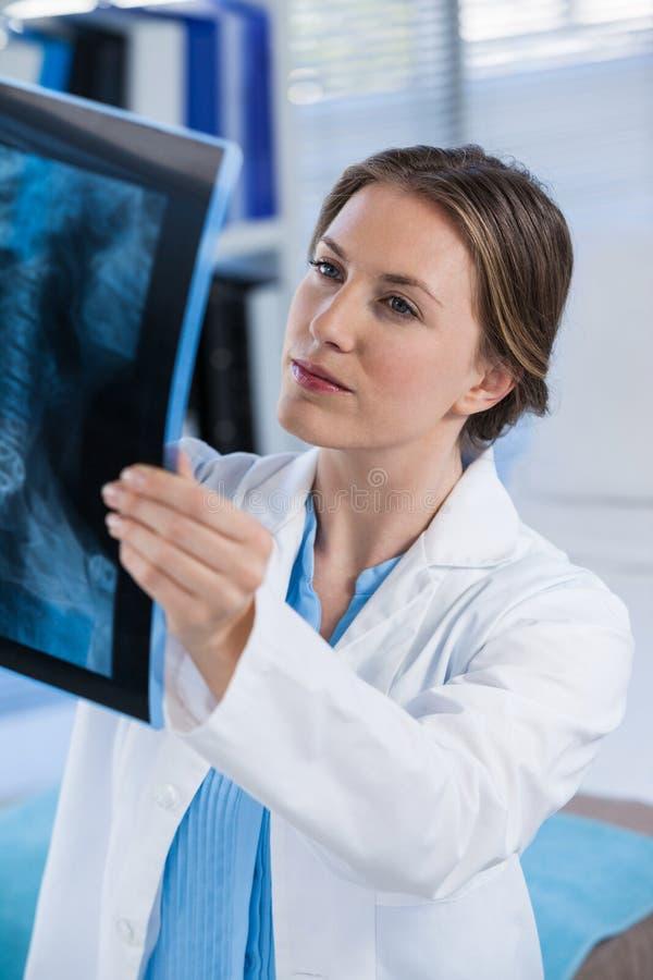 女性医生审查的X-射线报告 免版税图库摄影