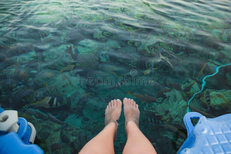 女性pedicured腿特写镜头顶视图在水晶大海下的 库存照片