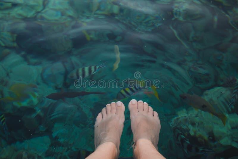 女性pedicured腿特写镜头顶视图在水晶大海下的 库存图片
