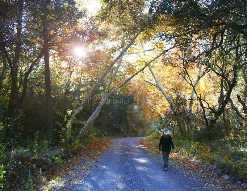 女牛仔走在秋天的一条森林公路 库存图片