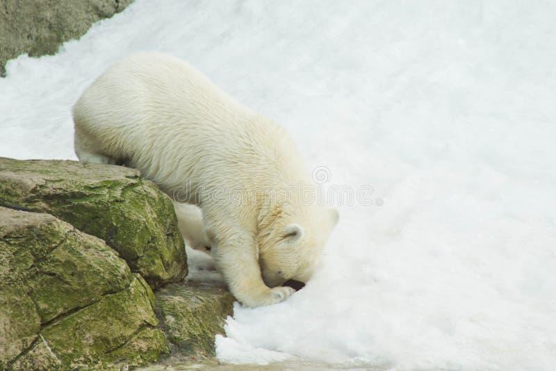 女用连杉衬裤在动物园里涉及雪 免版税库存图片