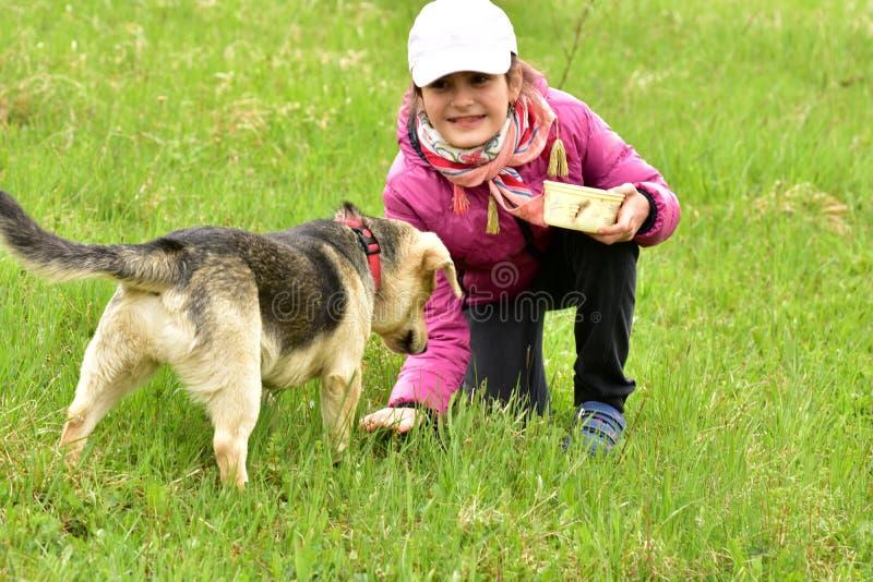 女婴喂养从手的狗 库存照片