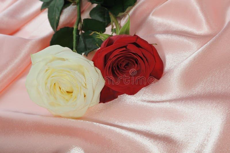 奶油玫瑰色缎二 库存照片