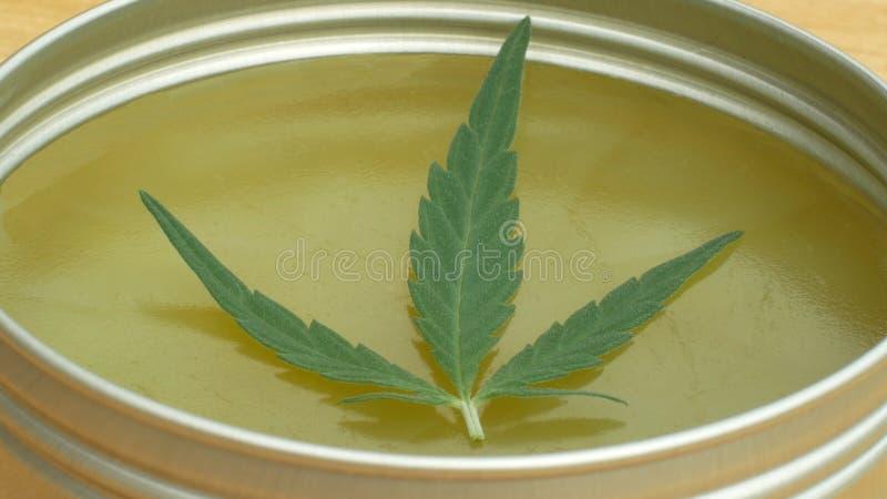 奶油色医药大麻大麻和叶子cannabidiol CBD收获了烘干软膏的生产的种子质量 免版税图库摄影