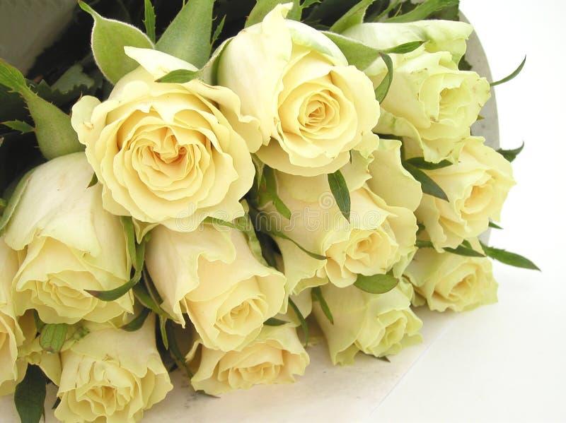 奶油色玫瑰花蕾 免版税库存照片