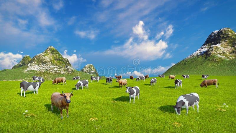 奶牛在高山牧场地吃草 库存例证