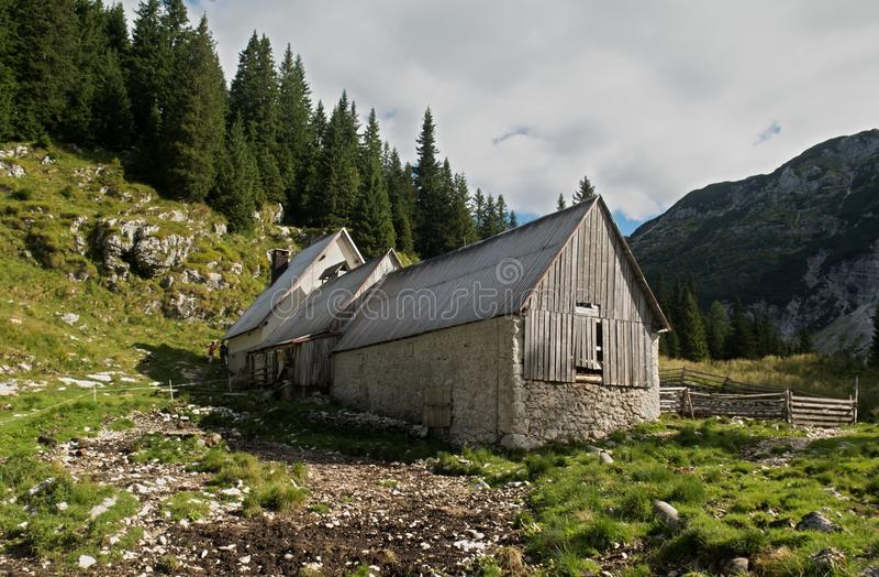 奶牛场在Krnsko jezero湖附近的Planina Duplje在朱利安阿尔卑斯山 图库摄影