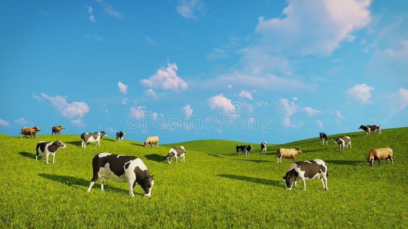 奶牛牧群在一个绿色牧场地的 皇族释放例证