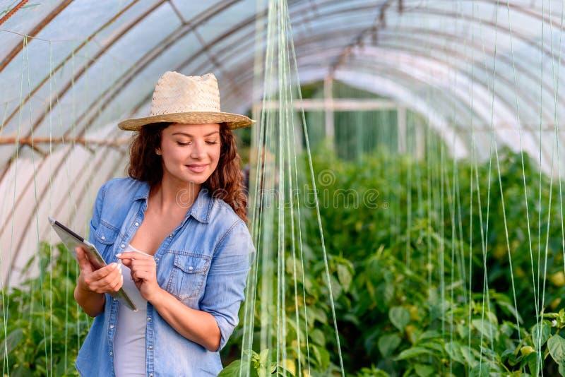 她的温室藏品片剂的企业家妇女 年轻女实业家 库存照片