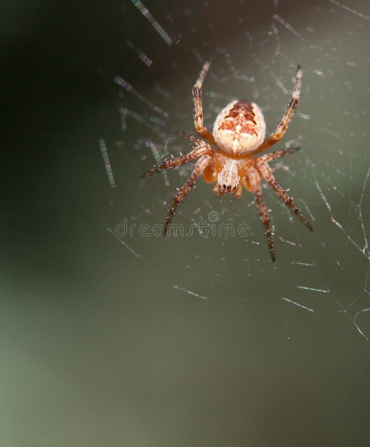 Download 她的蜘蛛网 库存图片. 图片 包括有 本质, 爬行, 蜘蛛, 宏指令, 长毛, 敌意, 关闭, 万维网, 行程 - 15684077