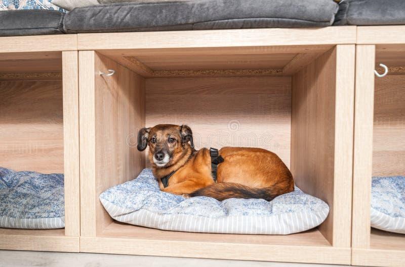 好人和谎言采取的被放弃的无家可归的狗在一个舒适的软的坐垫在宠物店 图库摄影
