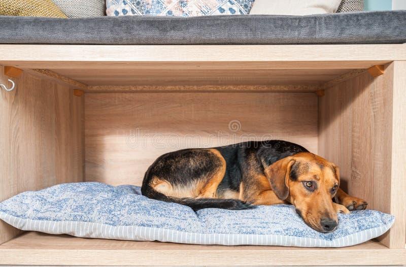 好人和谎言采取的被放弃的无家可归的狗在一个舒适的软的坐垫在宠物店 免版税库存照片
