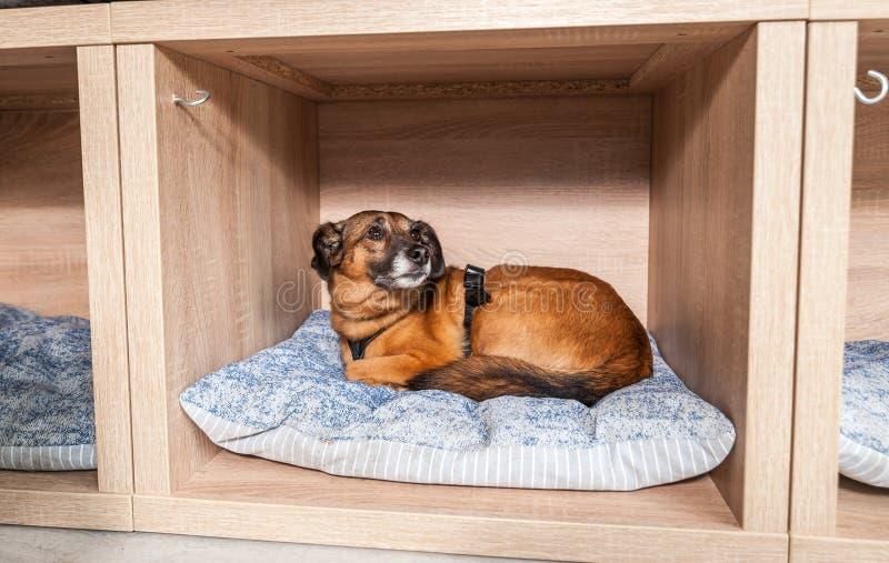 好人和谎言采取的被放弃的无家可归的狗在一个舒适的软的坐垫在宠物店 库存图片
