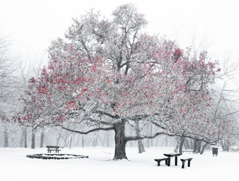 好场面冬天 免版税图库摄影
