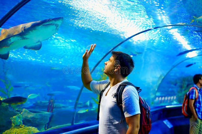 好奇旅游观看与在鲨鱼的兴趣在oceanarium隧道 免版税库存照片