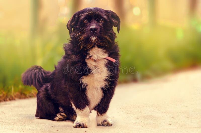 好奇狗一点 库存图片