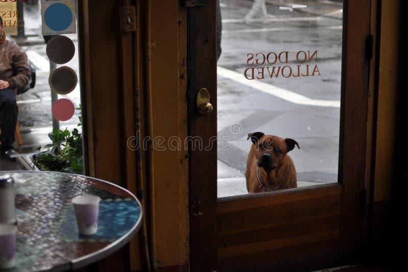 好奇狗在咖啡馆之外等待 免版税库存图片