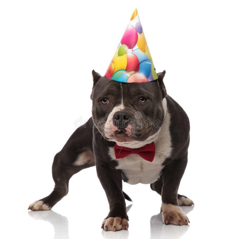 好奇美国恶霸佩带的bowtie和生日帽子 库存照片