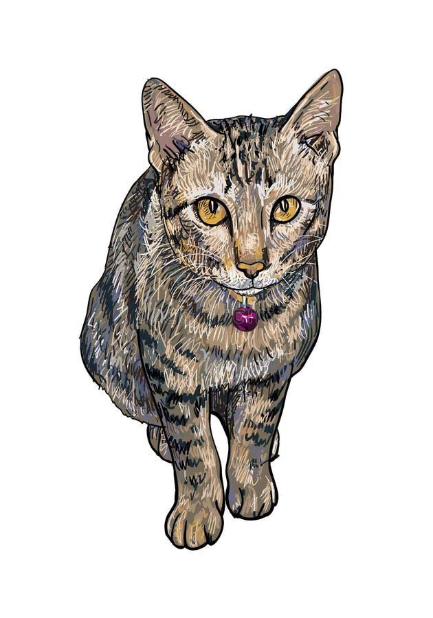 好奇逗人喜爱的猫 向量例证