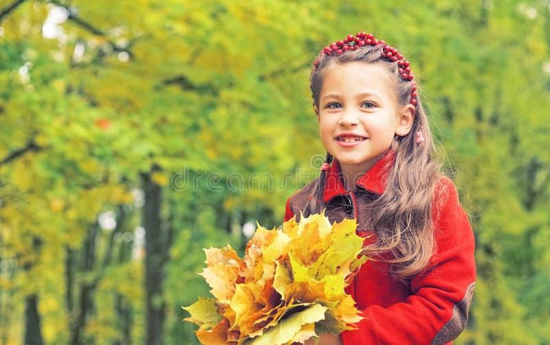 好小女孩的秋天画象红色外套的 在她的手上黄色槭树花束离开 晴朗秋天的日 库存照片