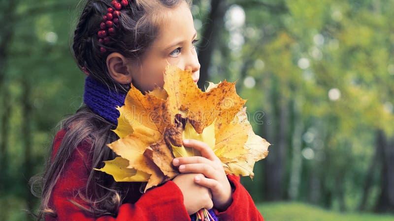 好小女孩的秋天画象红色外套的 在她的手上黄色槭树花束离开 晴朗秋天的日 免版税库存照片