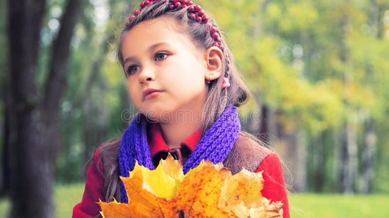 好小女孩的秋天画象红色外套的 在她的手上黄色槭树花束离开 晴朗秋天的日 图库摄影