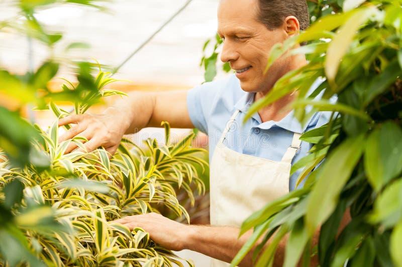 好照料植物 免版税库存图片