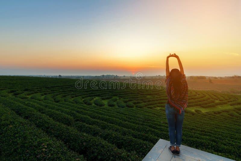 好生活方式旅客妇女愉快的感觉日出早晨放松和面对在自然茶农场的自由, 库存照片