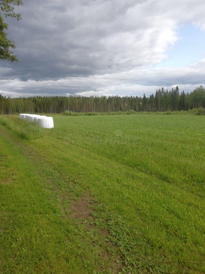 好的平安的绿色领域!:& x29; 库存照片