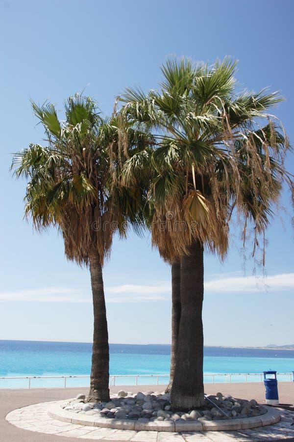 好的棕榈树 免版税库存照片