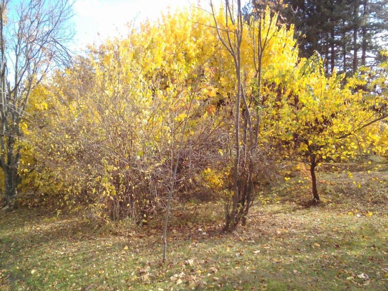好的秋天视图 库存照片
