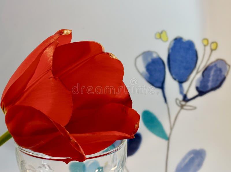 好的红色郁金香一个浪漫设定 免版税库存照片